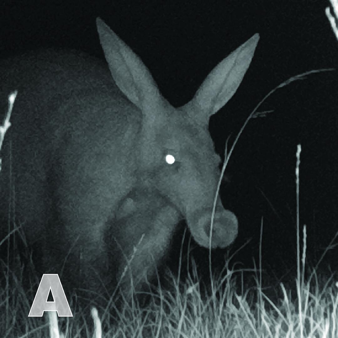 A is for Aardvark